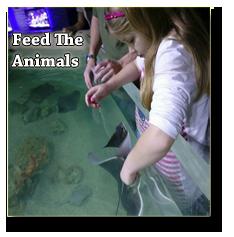 girl feeding animals