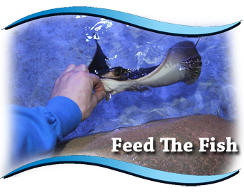 person feeding a sting ray some food