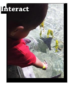 kid feeding some guppies