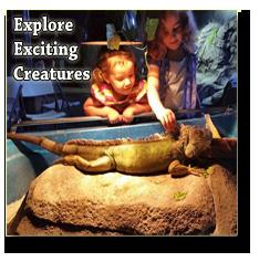 girls looking at a lizard
