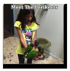 girl with lorikeets
