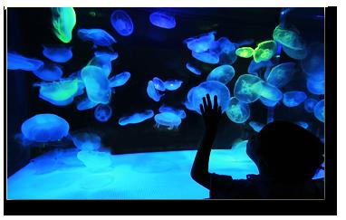 Contact The Austin Aquarium Austin Aquarium