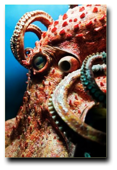 Octopus Deep Sea Creature Encounter Austin Aquarium