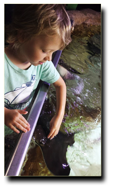 girl petting sea creature