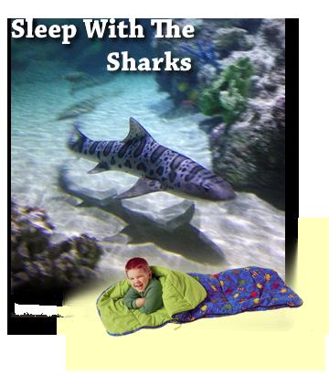 Austin Aquarium sleepshark