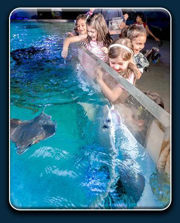 Austin Aquarium Stingray Camp