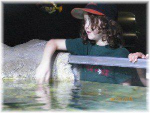 Austin Aquarium Bookout feeding sharks