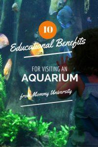 Austin Aquarium mommy university