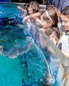 Feed Stingrays Austin Aquarium