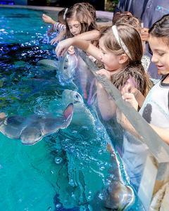 Austin Aquarium Feed Stingrays