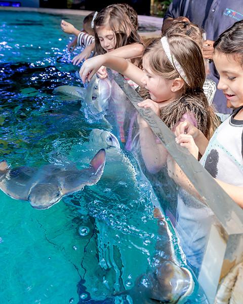 Top Ten Southern Aquarium