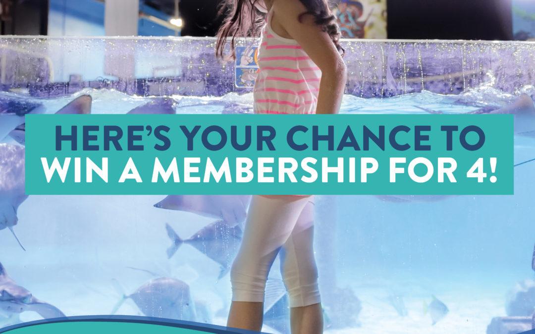 Austin Aquarium Is Giving Away Free Memberships Everyday Through Jan. 15