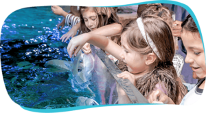 Top Ten Fun Things to do Austin Aquarium Texas Fee Touch Sharks Stingrays
