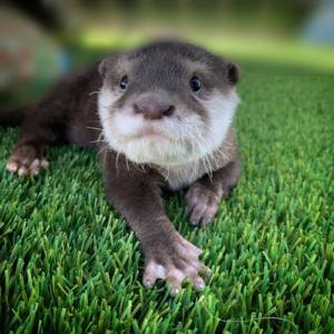 Austin Aquarium Otter Encounter